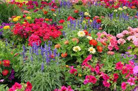 garden flowers pictures gallery 4k wallpapers