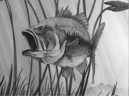 fish drawing in environment ceri nichols