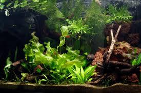 Tropical Aquatic Plants - how to set up a planted tropical community aquarium u2014 practical