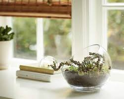 feed your need for green with terrarium the gazette