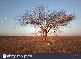 lone tree in desert stock photos u0026 lone tree in desert stock