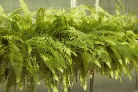 plants indoors bringing your plants indoors and outdoors space for life