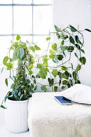 climber plants are the right choice if you want to bring the