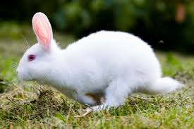 rabbit rabbit why we say pinch punch and white rabbits on the day of