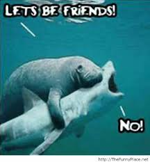 Awesome Meme Quotes - lets be friends funny pictures awesome pictures image