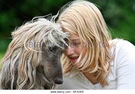 afghan hound ottawa retainers stock photos u0026 retainers stock images alamy