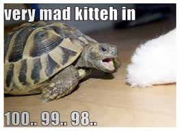 Funny Turtle Memes - memes cute animal pictures and videos blog part 6