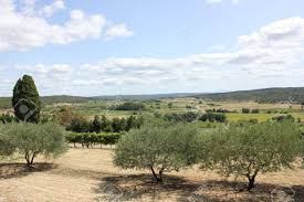 typical landscape of vaucluse province in south of france