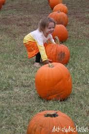 Pumpkin Patch Frisco Tx by The Pumpkin Patch Flower Mound Pumpkin Patch Dukes And Duchesses