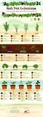 25 best culinary herb ideas on pinterest herb 13x19 poster
