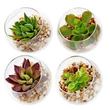 Cubicle Accessories by Cool Plants That Will Add Color And Life As Cubicle Accessories