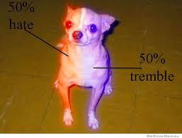 Meme Chihuahua - the anatomy of a chihuahua weknowmemes