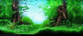 Aquascape Freshwater Aquarium Manage Your Freshwater Aquarium Tropical Fishes And Plants Aga