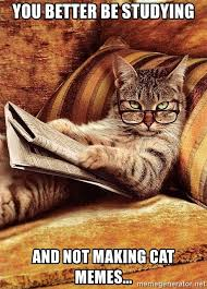 Newspaper Cat Meme - you better be studying and not making cat memes cat reading