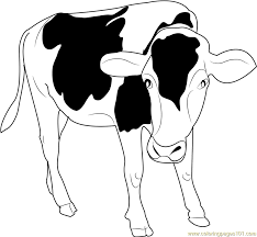 black and white cow coloring page free cow coloring pages