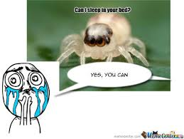 Cute Spider Meme - rmx cute spider by mada959 meme center