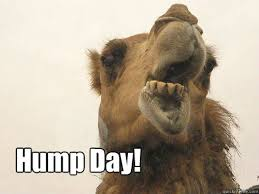 Hump Day Camel Meme - hump day birthday camel quickmeme