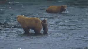Running Bear Meme - very gif find share on giphy