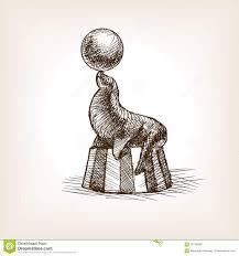 circus seal with ball sketch vector illustration stock vector