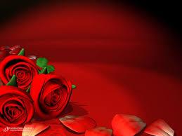 wallpaper flower red rose red flower wallpaper hd wallpapers pulse