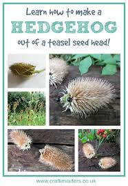 teasel hedgehogs hedgehogs super easy and learning