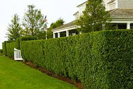 Bushes For Landscaping Garden Design Garden Design With Shrubs For Landscaping Best