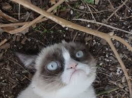 Grumpy Cat Meme I Had Fun Once - grumpy cat on earth wallpapers and images wallpapers pictures photos