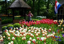 spring tulips at keukenhof garden in amsterdam