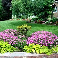 Amish Home Decor 4 Amish Flowers Home Fb Neil Sperry U0027s Gardens
