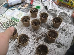 seed starting tips u2013 learn about the best time to start seeds