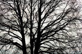 the bare twigs and branches of a tree in winter stock photo