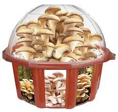 amazon com dunecraft grow your own mushrooms domed terrarium