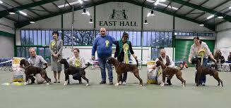 boxer dog shows 2016 championship show 2016 midland boxer club