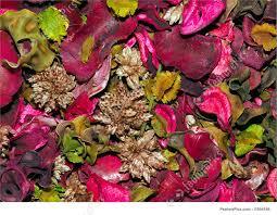plants potpourri background stock photo i1054186 at featurepics