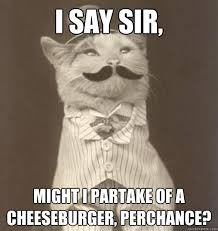 Business Cat Memes - original business cat memes quickmeme
