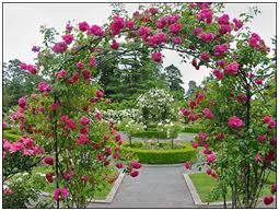 immagini di giardini fioriti curare i fiori nostro giardino giardinaggio fai da te