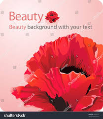 beauty background red poppy flower place stock vector 50049757
