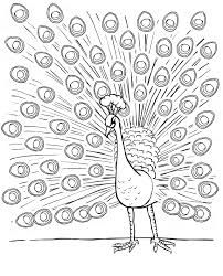 peacock coloring pages for kids coloring me