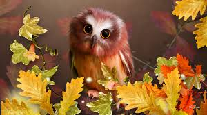 cute fall wallpaper for desktop birds cute autumn owl brown ivy fall big eyes leaves oak full hd