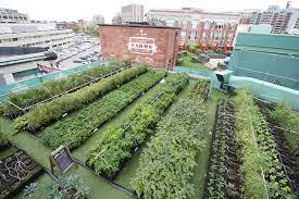 green city growers urban farming fenway farms