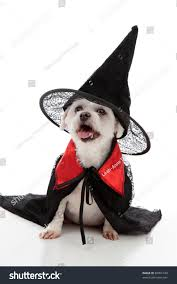 pet halloween background scary evil dog witch wizard wearing stock photo 88001749