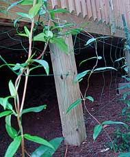 Support For Climbing Plants - tenax flora for climbing vegetable plants