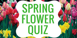 Identify Flowers - quiz can you identify these spring flowers simcoe com