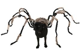 Dog Minion Halloween Costumes Diy Spider Dog Costume Halloween Costumes Blog