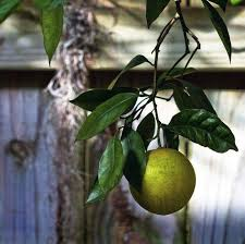 10 tips for growing fruit trees at home treehugger