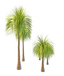 landscaping palm tree 3d model 3ds max files free