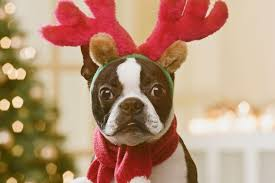 dog christmas what should you feed your dog for christmas dinner fleet