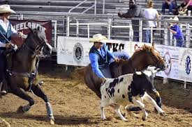 Texas travel pony images Ponies travel to pittsburgh nira southern region rodeo the pony jpg