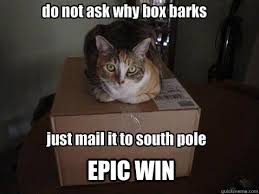 Epic Win Meme - epic win cat memes quickmeme