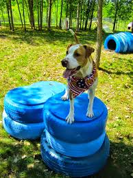 Dog Backyard Playground by Veterinary Pet Health Care 8 Droolworthy Dog Friendly Backyards